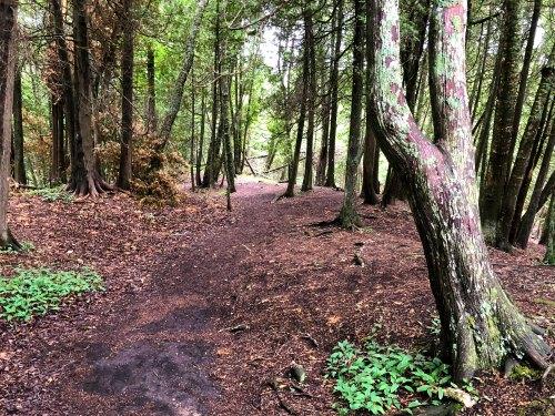 Mackinac Island, Tranquil Trail Bluff